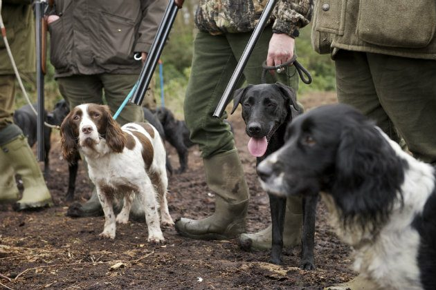 Should we neuter dogs? - Shooting UK