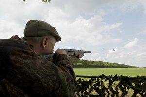 Pigeon shooting from hide