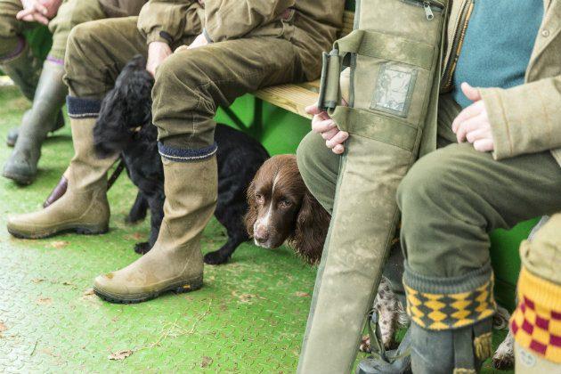 gundog with owner