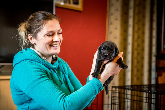 Which gundog puppy will be pick of the litter?