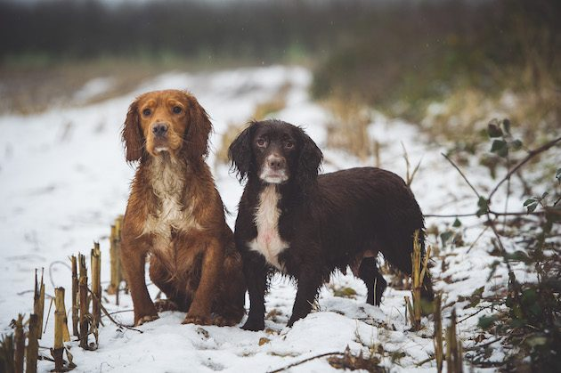 Keeping your dog safe in the snow