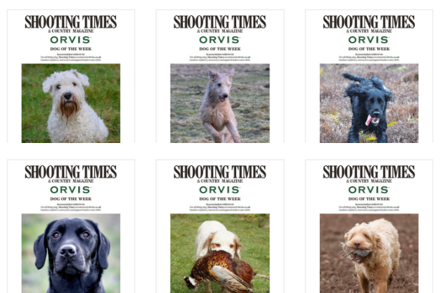 Where are all the best dogs being seen? In the Shooting Times 'Dog Of The Week' gallery of course …