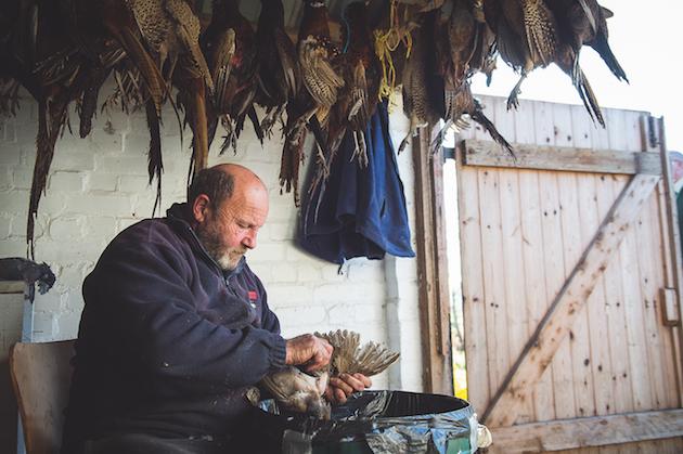 plucking pheasants