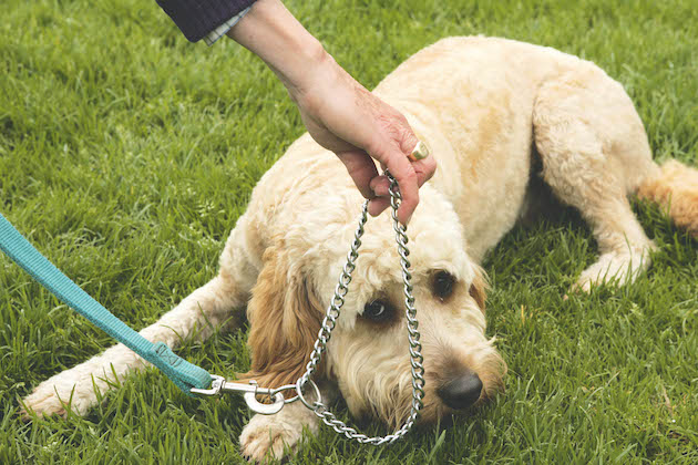 Choke collar - what they're used for and the risks to your dog