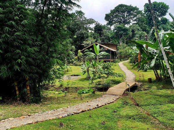 Spiritual journey takes Joe van Niekerk from Toulon to the jungle