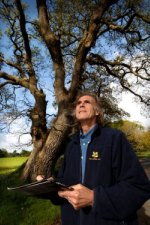 National Trust tree expert