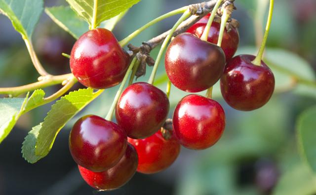 Plant fruit trees in autumn