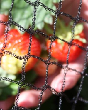 fruit netting