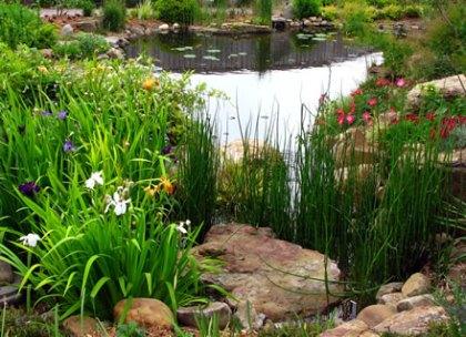 water-bog-garden