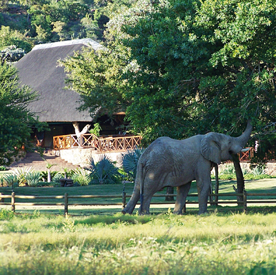 Elephant at Main Lodge