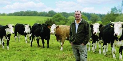 Ensors cattle