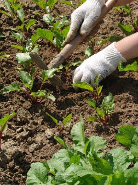 organic gardening work