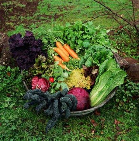 organic veg gardening