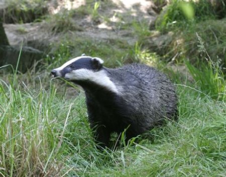 badger field