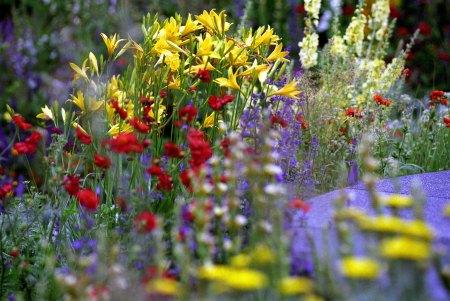 chelsea flowers.