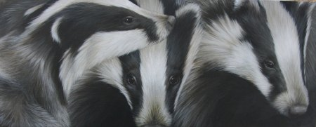 Badgers by Clare Shaughnessy