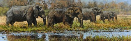 Elephants by Tony Forrest
