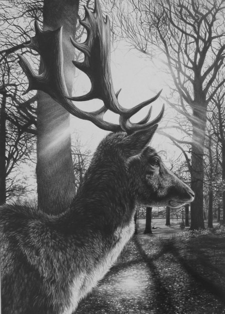 Richmond Fallow by Julie Rhodes