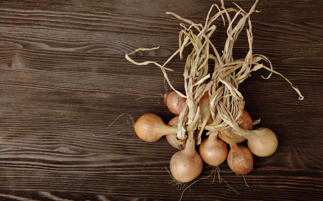 bring in onions - september gardening tips