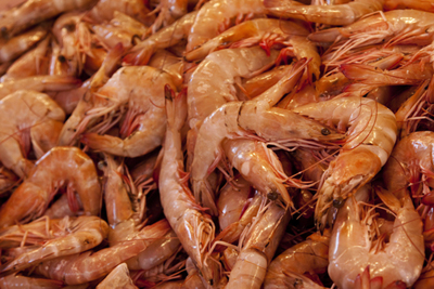 How to go shrimping - Country Life