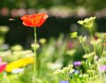 wildflower meadow thumb.jpg