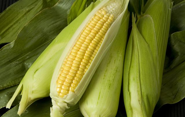 September gardening tips - harvest sweetcorn