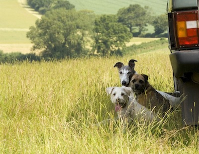 country lifestyle perimeter terrier article
