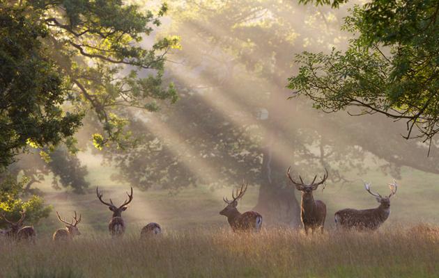 woburn park, bedfordshire