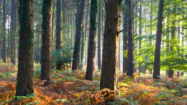 Exmoor National Park (©Alamy)