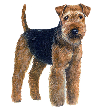 Britain\'s favourite terrier breeds - Country Life