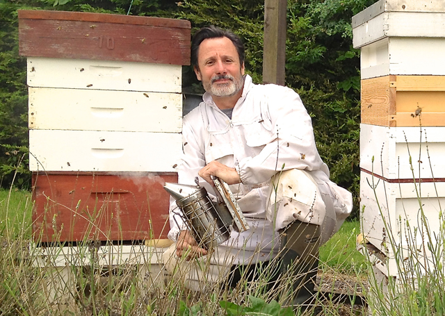 Learn beekeeping at the country life fair