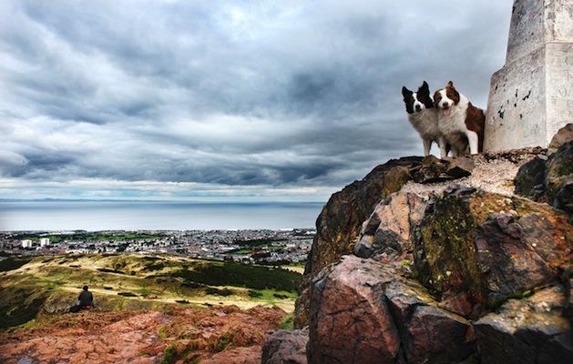 Dogs in Edinburgh