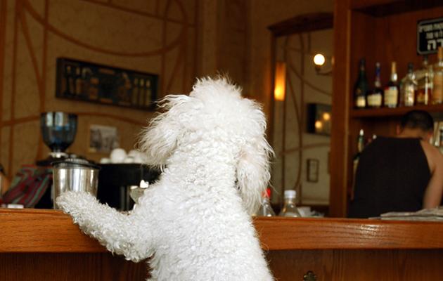 Holyrood A Dog Friendly