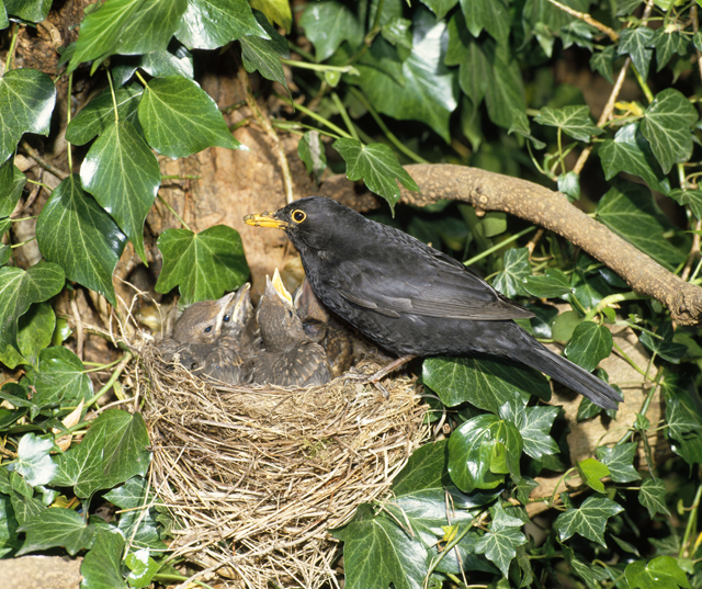 How To Identify Bird Nests Country Life