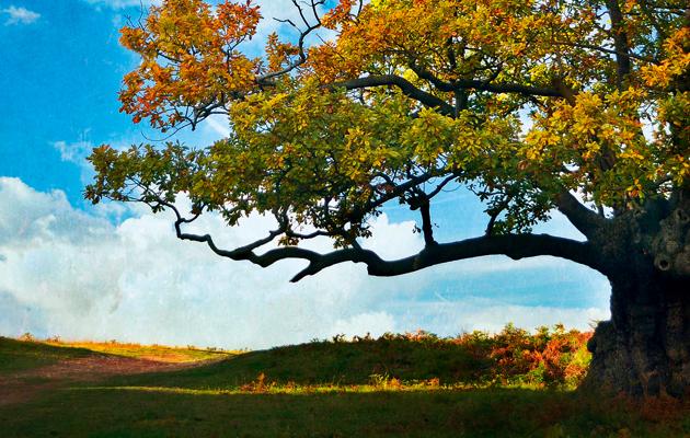 oak apple day