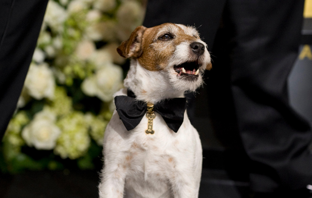 famous jack russell terriers