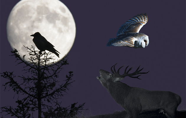 Which animals do you hear at night?