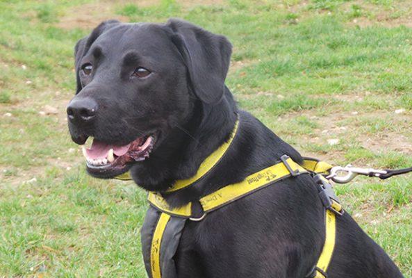 Snetterton Dog Rescue