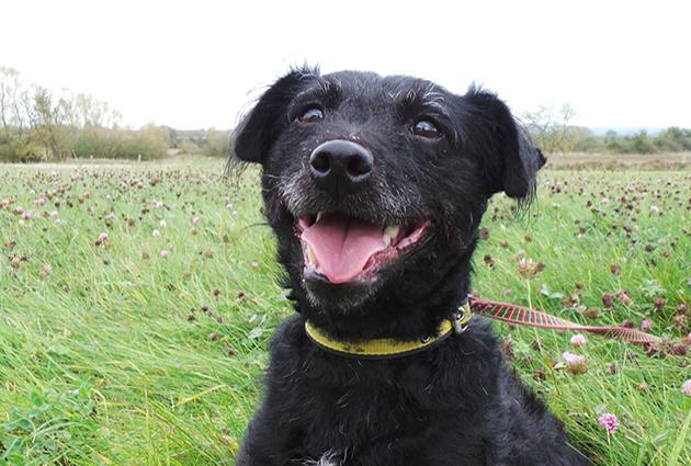 adopt a rescue dog - angus