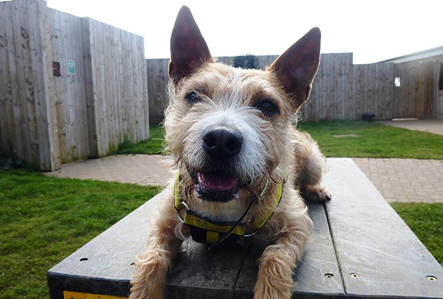 adopt a rescue dog - bertie