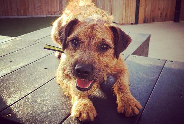 adopt a rescue dog ralph