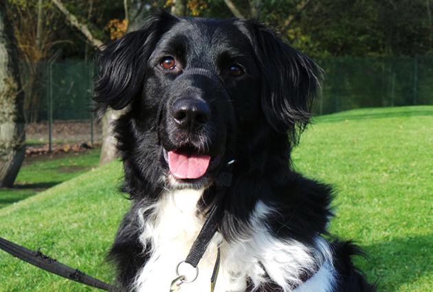 adopt a rescue dog samson