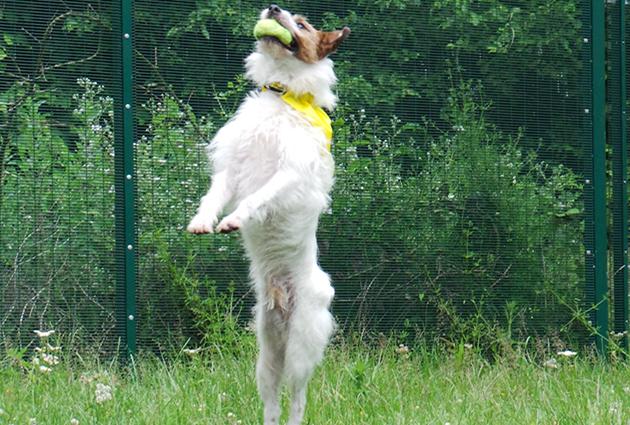 adopt a rescue dog - skip