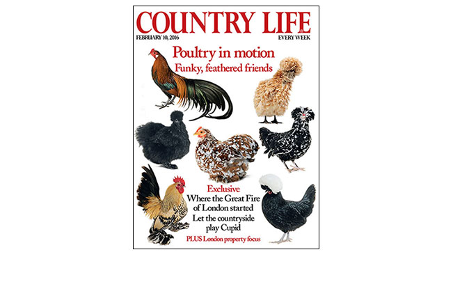 country life ABC increase