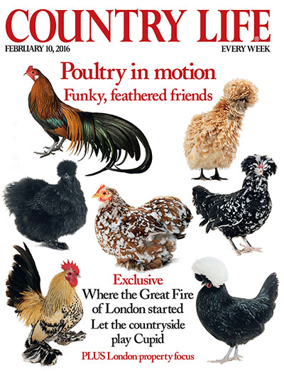 Country Life February 10 2016