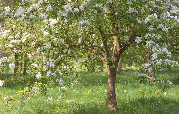 A guide to flowering trees country life guide to flowering trees mightylinksfo Image collections
