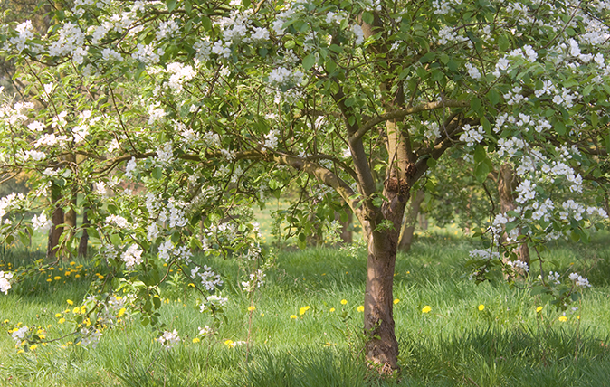 guide to flowering trees
