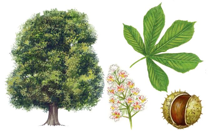 15 Leaf Icons | Tree logo design, Tree icon, Tree illustration