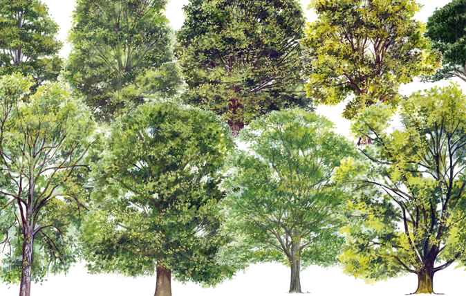 A simple guide to identifying british trees country life for Garden trees types