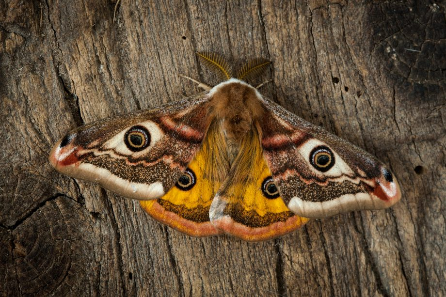 A Simple Guide To Identifying British Moths Country Life